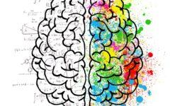 Jobb agyfélteke fejlesztése